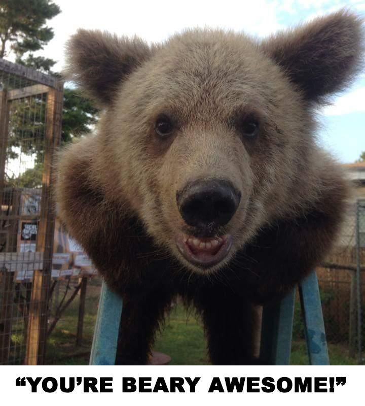 BearyAwesome